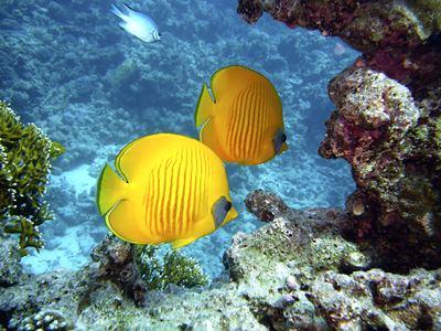 Snurkowanie w Egipcie. Rafy koralowe i kolorowy świat rybek.