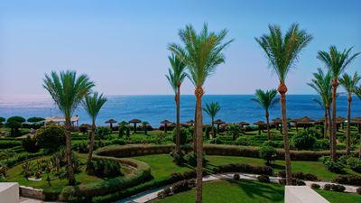 Wakacje w Egpicie nad Morzem Czerwonym pod palmami.